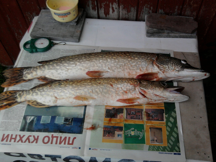рыба с острова Кудряш