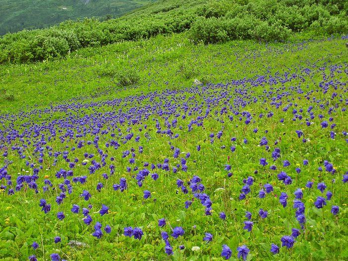 Долина на водоразделе гдето в Красноярском крае.