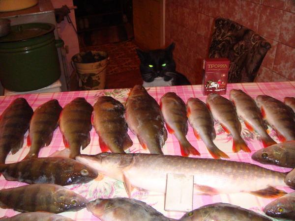 Он всегда там где рыба!