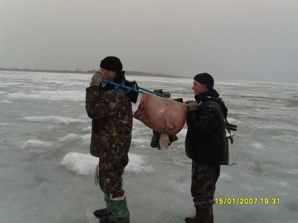 оз. Чаны. Новый способ транспортировки рыбы.
