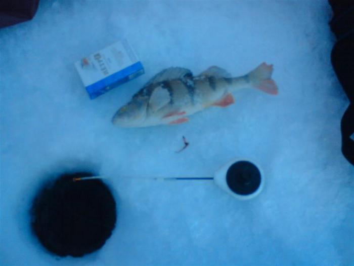 Первая рыбка пойманная на чёрта без насадки. +оторванный чёрт, +один подзубальник и всё!
