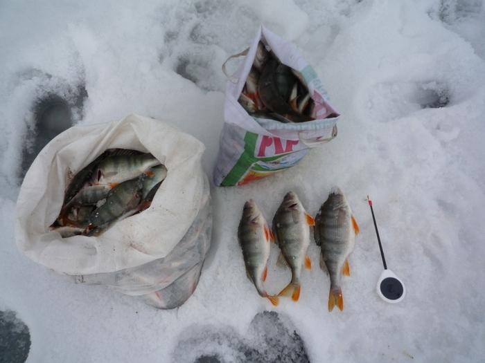 оз.Белое Красноярский край, крупного в эти выходные не было.