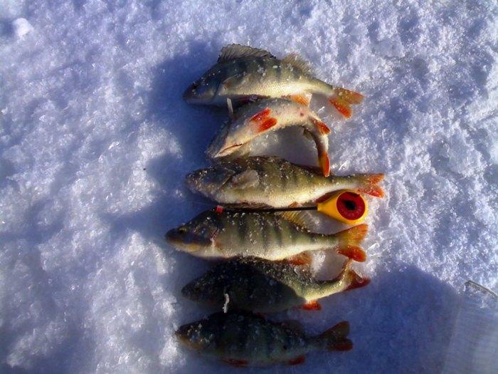 магазин тайдон рыболовный