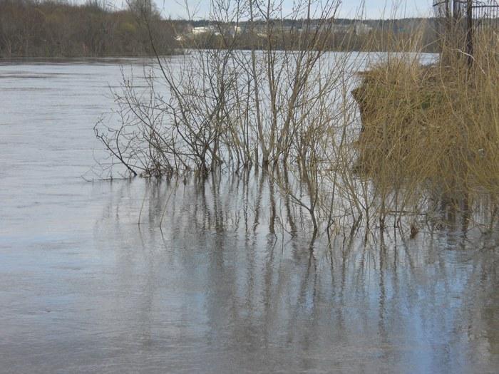 Устье р Барышихи справа