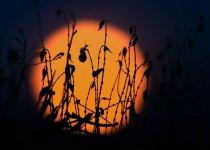 Муравей и солнце.  Сегодня в Верх- Ирмени после рыбалки на закате.