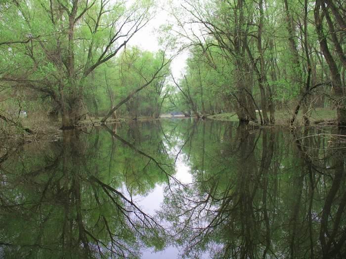 В сонном сумраке ракит Тускло озеро блестит
