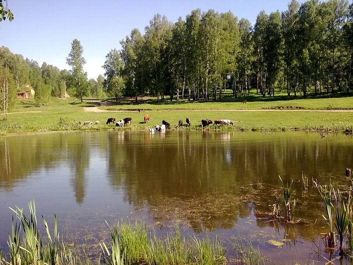 Деревенский пруд (Раздольное), вид на дорогу на платник