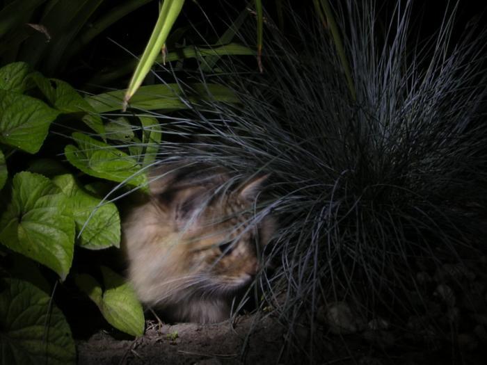 Ночной охотник в засаде.