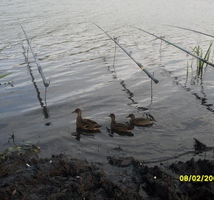Приплыли узнать как рыбалка?=))))
