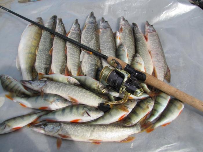 Наш улов! Спасибо природе, что показала пацанам на первой же рыбалке хороший клев!