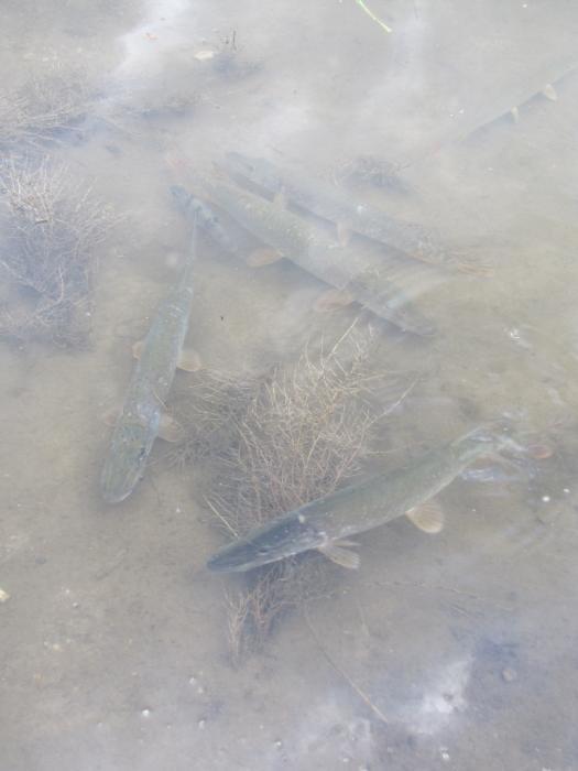 Наш садок-аквариум :)