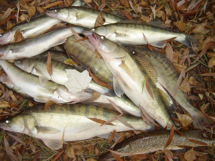 одна из последних осенних рыбалок.река Обь