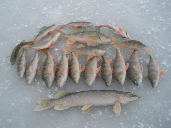 Рыбки!