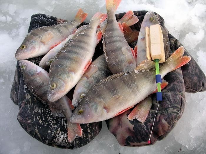 Рыба в оби картинки