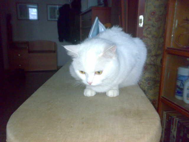 моя котейка, для Эрики.