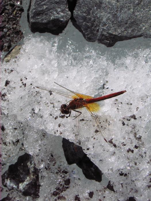 Че-то скучно на сайте в морозы. Берем пример у стрекозы. Как-только пригрело, - оттаяла, очухалась и полетела (ледник, высота - 3 км)... А у нас потеплеет в пятницу :)