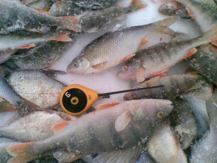 Отдых от соревнований по рыбалке. Я на любительской.