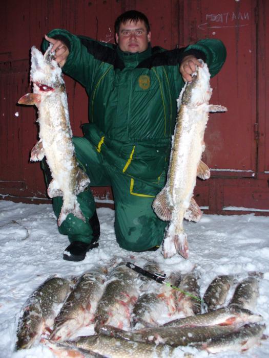 Фотографировались в городе, к сожалению,фотоаппарат с собой не взяли. 27 ноября 2010. 4 щуки за пять кг . с 10утра до 15 часов . 30 км от Барнаула.