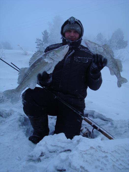 Судачки с последней рыбалки. 3 и 1 кг