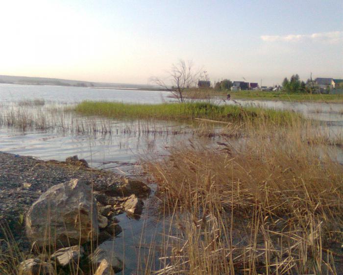 обской залив летом