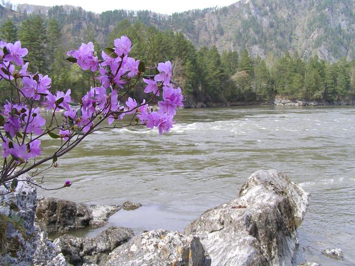 Алтай 2 мая 2011
