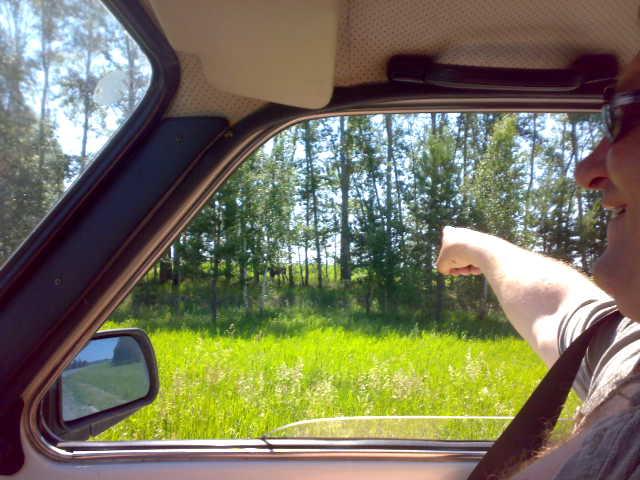 если пригледется. в лесополосе виден молодой лось, он нам дорогу перебежал между черепаново и сузуном