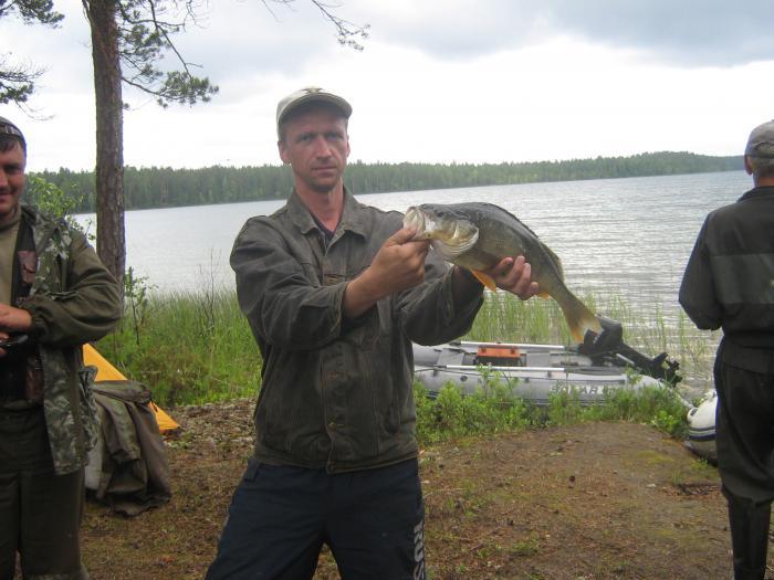 Обитатели озера, окунь 1,3 кг.