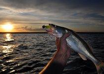 Рыбалка на закате(ОВХ)