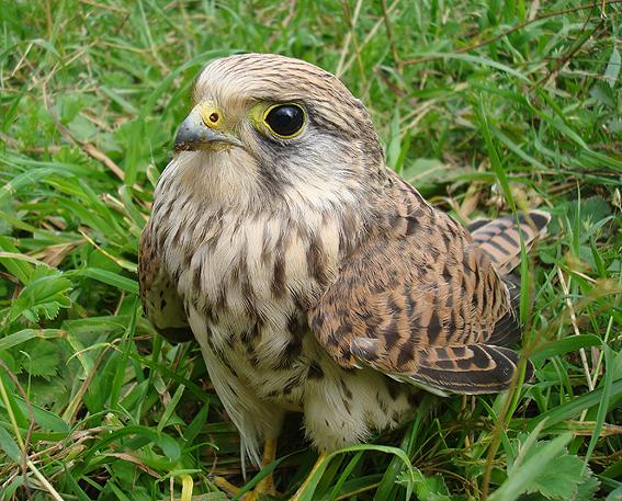 Кто знает что за птица?