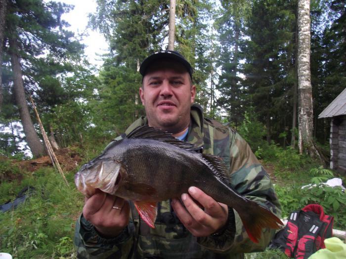 Окунь с озера Окуневое Томской области