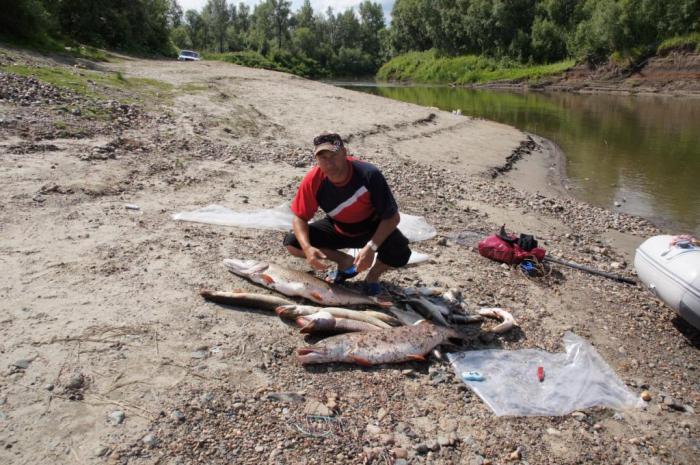 Рыбалка 1.5 дней одного экипажа. Вся рыба трудовая. Трофейная на тролинг. 2 трофея на 10 и 11900. Пара по 5