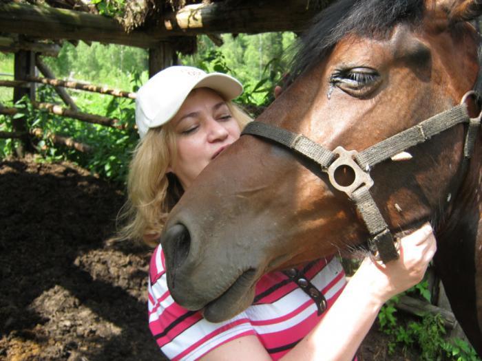 Лошадку привезли из Барнаула...  Теперь живет в урочище Верх-Аюла...