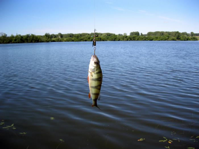 Рыбалка в уч балте
