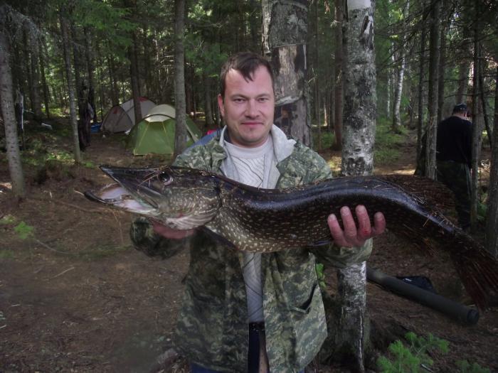 Щука озера Окуневое Томской области
