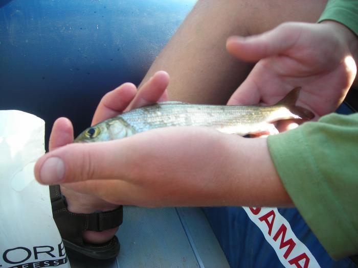 Большой Сплав по Мрас-су . Ловись рыбка вкусная !