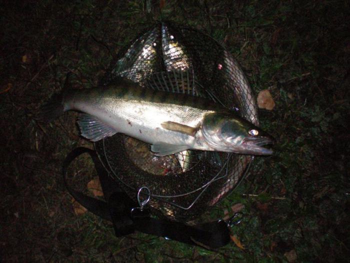 Отличная погода-отличная рыбалка! Ночь с 5 на 6.09