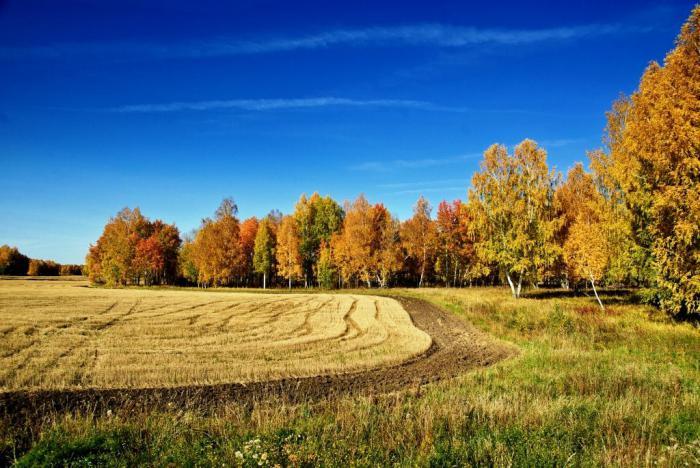 Золотая осень_1