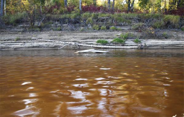 Вода в оби ниже Каргаска