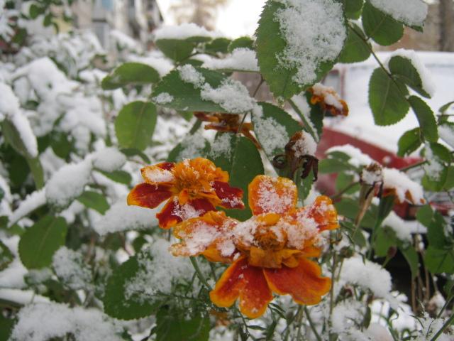 Лето встретилось с зимой...