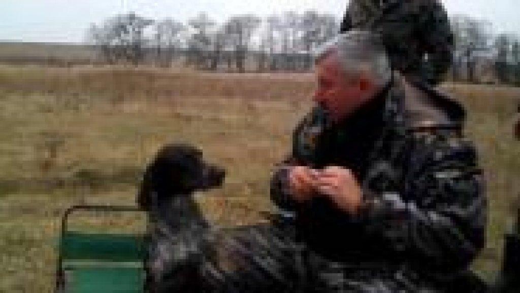 Настоящая охотничья собака -Юмор
