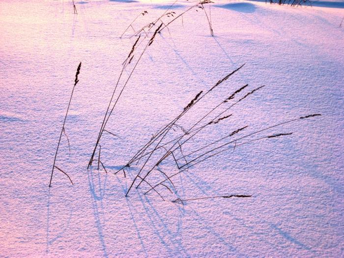 трава мурова.