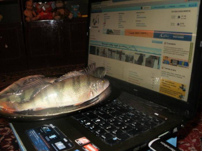 Мы тоже на FishinSib хотим...