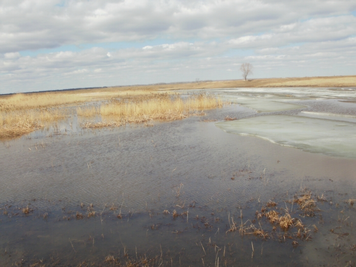 Лед на пруду поднялся.