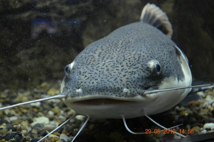 фото с аквариума