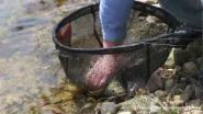 речной лов рыбы в Канаде