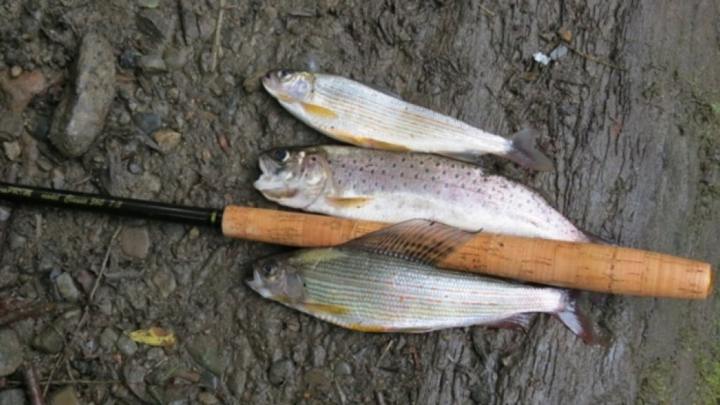Новая рыболовная снасть ТЕНКАРА. Часть 10