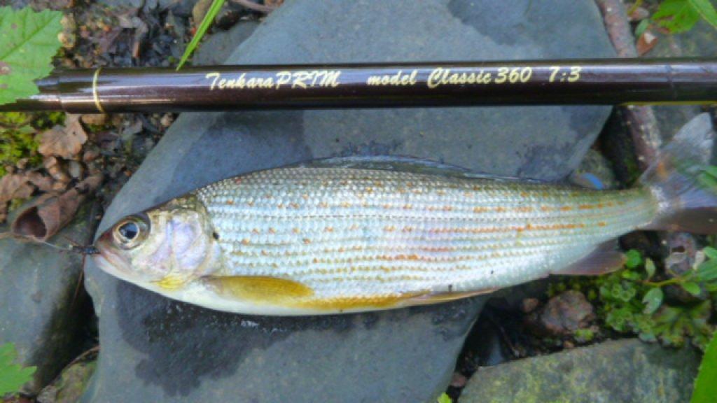 Новая рыболовная снасть ТЕНКАРА. Часть 9
