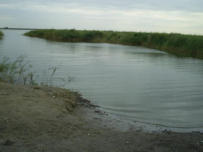 Сарыбалык