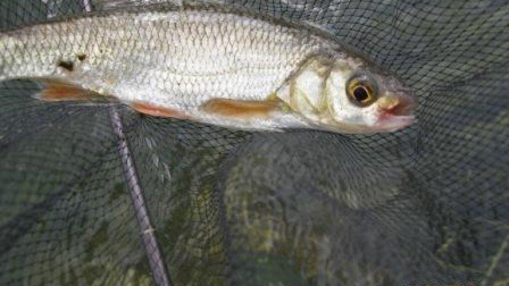 Новая рыболовная снасть ТЕНКАРА.   Часть 15