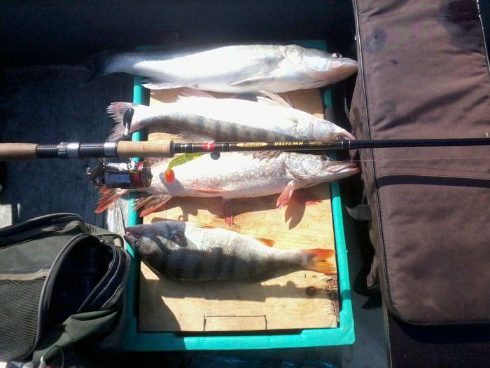 разные рыбки